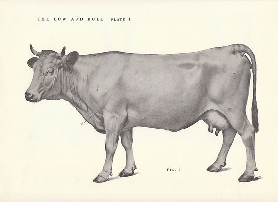 Vintage Cow and Bull S...