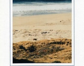 Cow on California Beach -- It's Not What You Look At That Matters, It's What You See -- Photo Greeting Card
