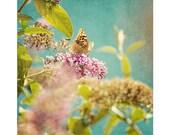 butterfly photograph - original fine art photography, nursery print, nature, flower blossom, pink, orange, turquoise - 5x5