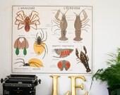 Vintage School Chart Spider Crayfish Industrial Decor