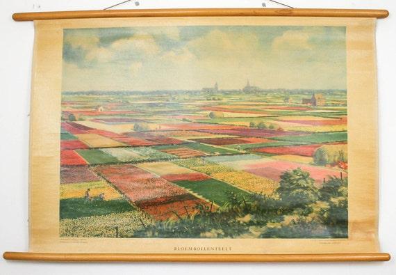pull down map Botanical chart Tulip fields Holland Paper on linen, dutch school print