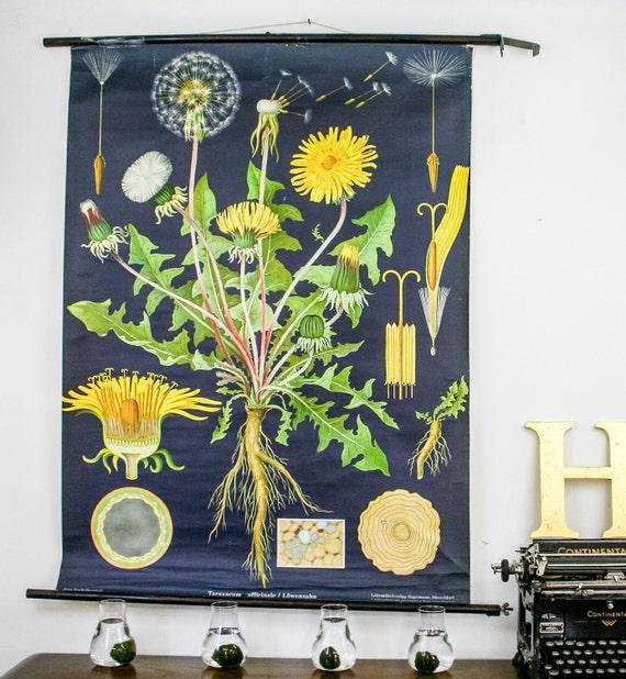 Botanical chart Dandelion Genuine vintage school pull down map Paper on linen, Jung Koch Quentell