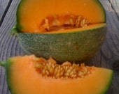 Cantaloupe Melon French Variety Petit Gris de Rennes Gourmet Excellent Sweet Flavor Juicy Texture Easy to Grow Rare Seeds