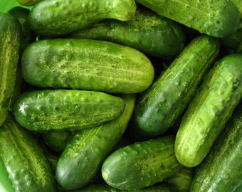 SALE Pickling Cucumber Organically Grown Heirloom Variety National Excellent Flavor Superior Quality Rare Seeds