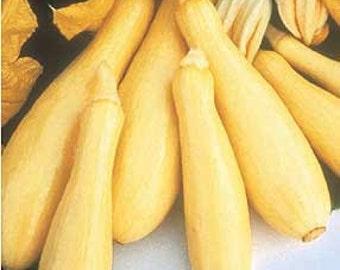 Straightneck Summer Squash Heirloom Variety Easy to Grow Bush Habit Excellent Mild Buttery Flavor Organically Grown  NON GMO Rare Seeds