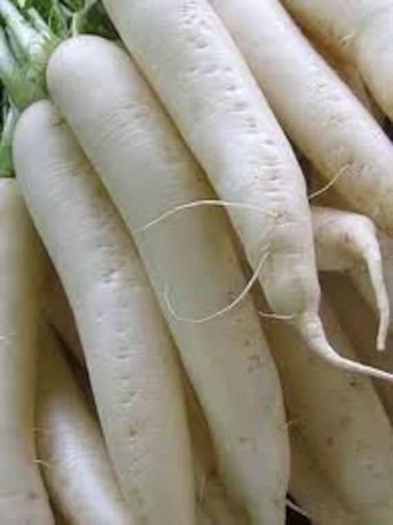 Organic Heirloom Daikon Radish Seeds Rare