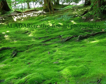 "Feng Shui Green Spring Landscape Bedroom Decor ""Moss / sketches from Kyoto""  Zen - fine art photography 8""x 10"" Loft Decor"