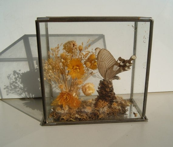 Vintage Glass Case Real Butterfly Diorama Pine Cone Dried Flowers Pan Pacific Sun Valley, CA
