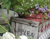 "Old wooden apple crate in garden -  5 x 7"" color print - CelesteCotaPhoto"