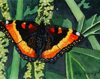 Milbert's Tortoiseshell Butterfly watercolour painting