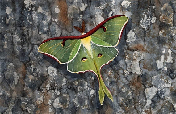 Luna Moth Watercolour Print Art Card