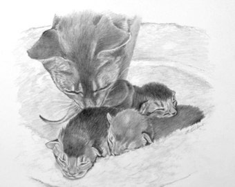 Cat and Kittens Art, Cat Art Print, Cat Drawing, Abyssinian Cats Art Print, Mother Cat with Kittens Print from Pencil Drawing by P. Tarlow