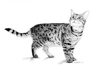 Tabby Cat Art, Tabby Cat B/W Print, Tabby Art, Tabby Cat Drawing, Cat Art Print, Tabby Cat Graphite Pencil Drawing by P. Tarlow