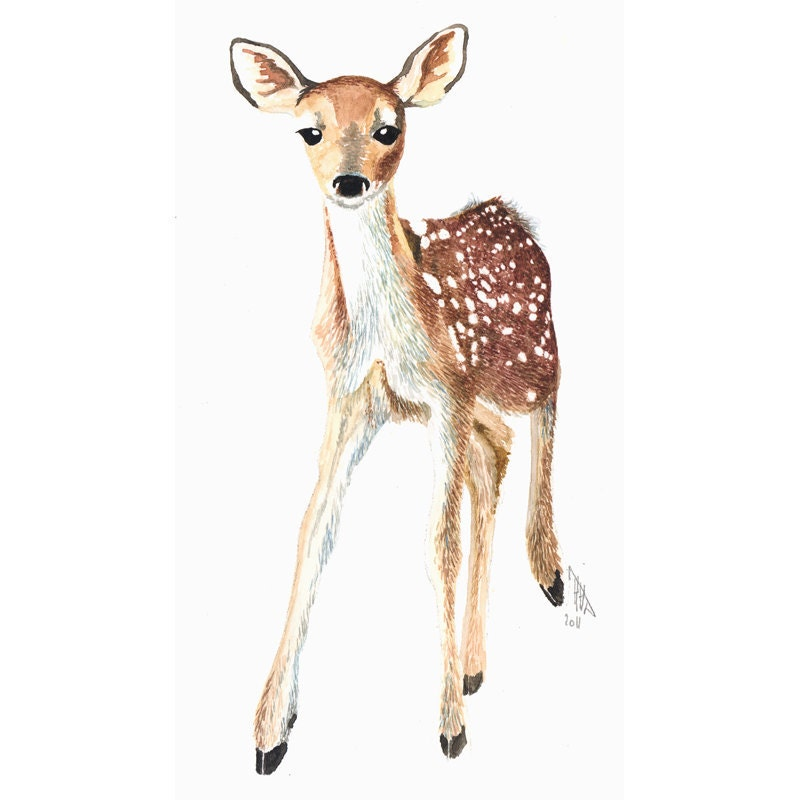 Fawn Wildlife Illustration Print from Watercolor by ...