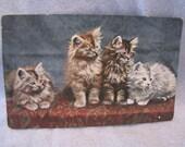 Vintage Postcard Bavaria Kittens Unused