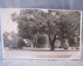 RPPC Brookgreen Gardens South Carolina Trees Washington 3 cent stamp