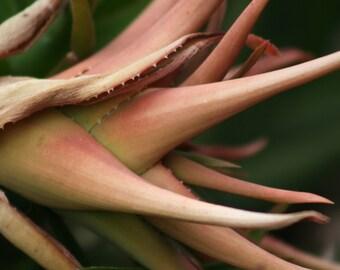 Succulent plant, 5 x 7 photograph CHARITY DONATION
