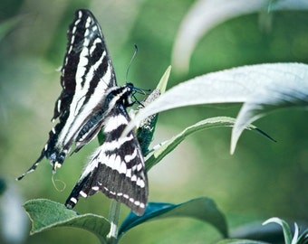 Butterfly 8x10 print green nature photography