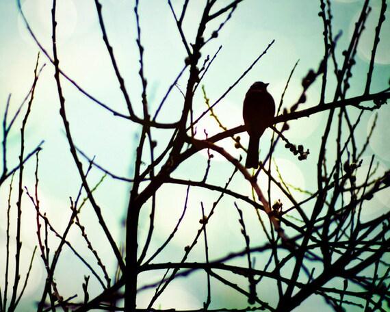 Nature photography, animal photography, Bird photograph 8x10 blue