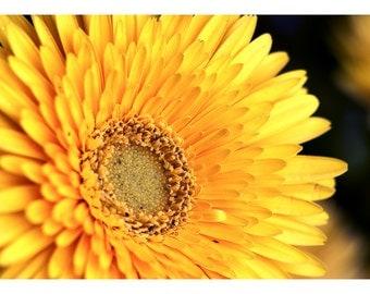 Nature Series Two: Yellow Gerbera Daisy