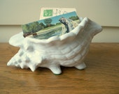 Conch shell organizer.  Entry catch all.  Nautical decor.