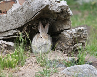 Rabbit, Here's Looking at You