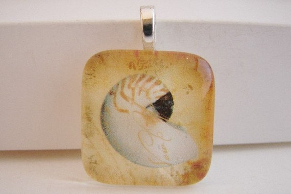 Nautilus Shell Pendant with Free Necklace