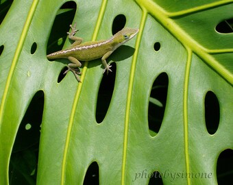 Tropical green gecko anole plant leaf nature photography hawaii