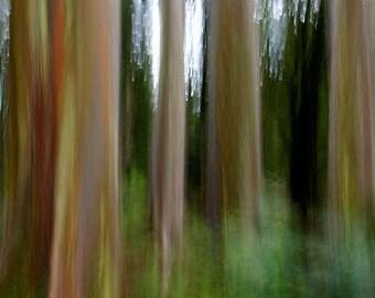 Mystic Forest Rainbow Eucalyptus mysterious forest Maui Hawaii