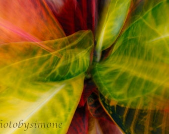 Croton fall colors red yellow green tropical plant Hawaii abstract fine art nature photography