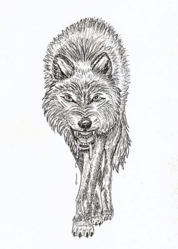 Pics For > Snarling Wolf Drawings