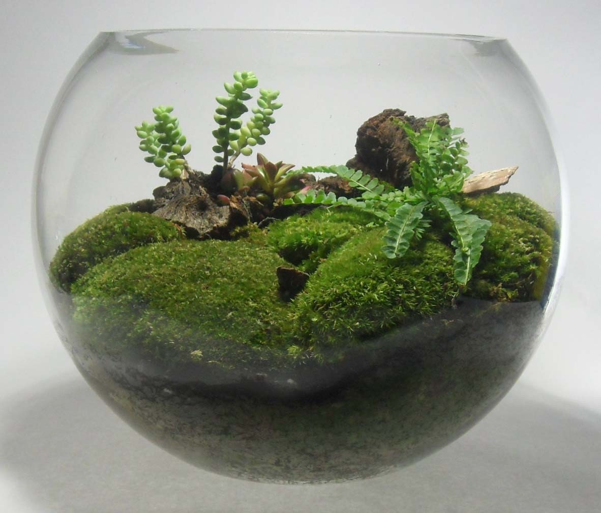 12 inch fish bowl glass terrarium