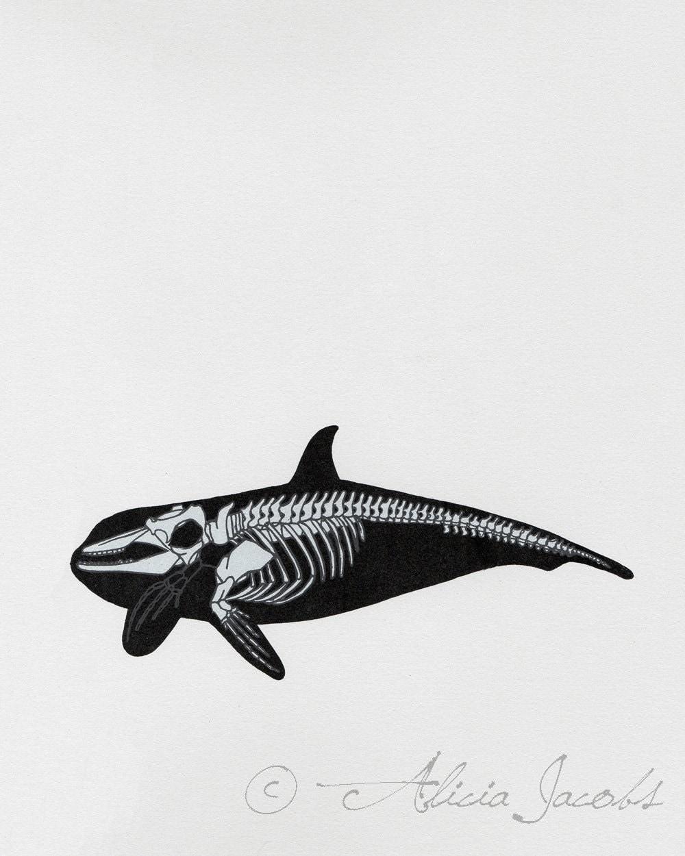 items similar to whale skeleton diagram screenprint on etsy