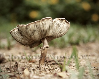 Mushroom Fungus Square Photograph Fine Art Photo Rustic Home Decor for Office or Living Room