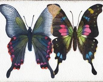 Overlapping Butterflies