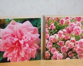 Pink roses, pink flowers, rose photos, spring photographs, 2 wooden box-frames, photo blocks