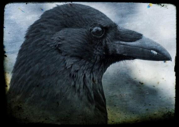 Supernatural- Crow fine art photograph, black bird photo, print, 5 x 7 inches No 11
