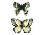 butterflies watercolor giclee print // YELLOW BUTTERFLIES // 8x10 - art print