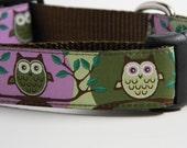 Owl Dog Collar- Cute Hoot Purple & Green