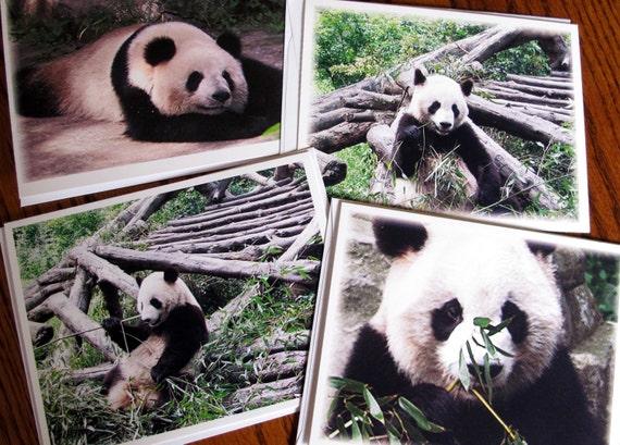 Panda Photography, Animal Photography, Wild Animal Photography