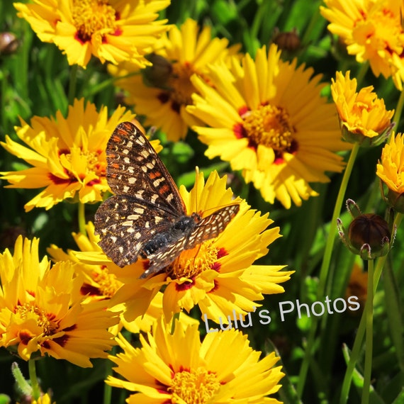 Butterfly Photo, Nature Photography, Prints and Cards