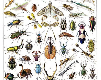 Digital download of Vintage French1932 encyclopedia of Insects and their French names.