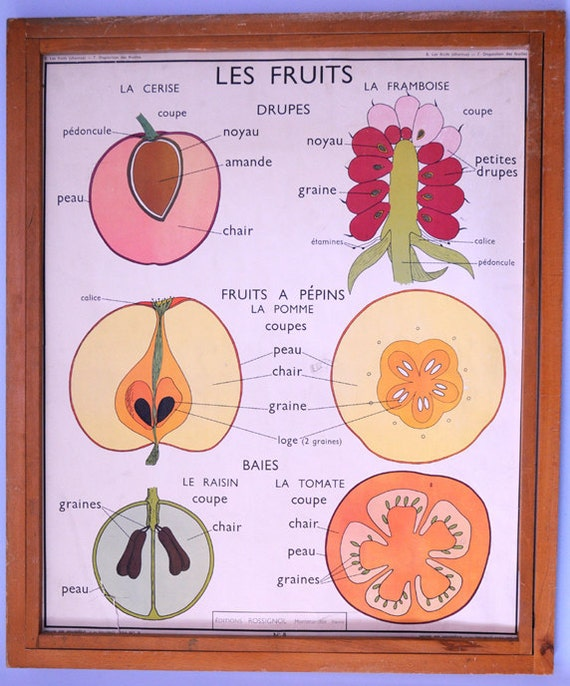 Stunning Vintage French School double-sided poster of fruits and leaves