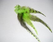Feather Flair Extensions (thick Grizzly Chartreuse Green)