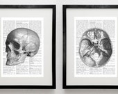 2 prints human brain & SKULL - anatomy Halloween poster  -  5x7 French paper - art print