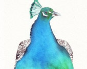 Peacock watercolor painting -P049-  print of watercolor painting 5 by 7