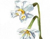 Jonquils art ORIGINAL watercolor painting