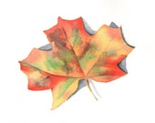Autumn Leaf Painting - Maple leaf - L017-  print of watercolor painting