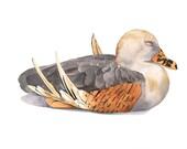 Duck  watercolor painting - Print of Watercolor Painting A4 print wall art print - bird art - art print - wildlife print