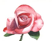 Rose Painting -flower art - print of watercolor painting 5 by 7 print